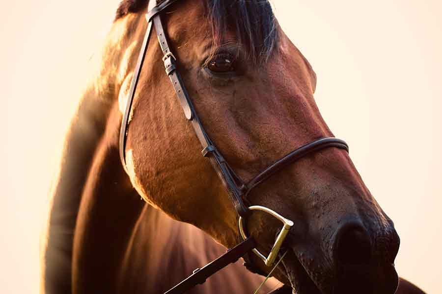 maneggi-valcavallina-dove-andare-a-cavallo